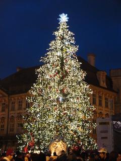 FOTKA - strom na Staroměstském náměstí