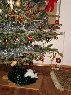 FOTKA - Nelly spí pod stromečkem - 3.1.2010.