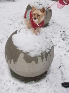 FOTKA - zimní vycházka