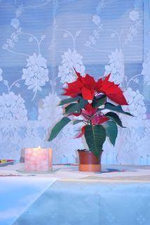 FOTKA - Vánoce už končí