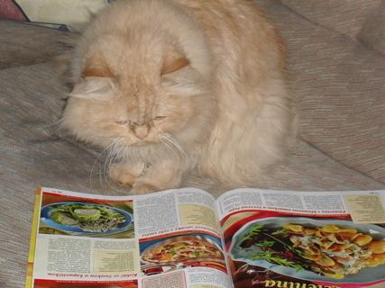 FOTKA - Počkej, něco si najdu, co máš uvařit a neruš!