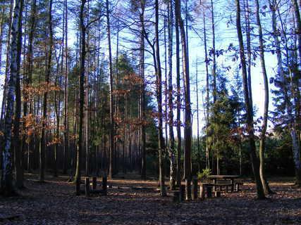 FOTKA - klánovický les