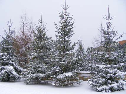 FOTKA - konečně zima