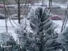 Mrazík  - okenní girlanda