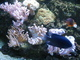Mořské akvárium 7