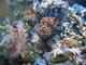 Mořské akvárium 9