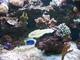 Mořské akvárium 11