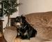 Moje zlatíčko Roxy - 22.1.2010