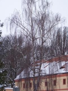 FOTKA - stromy na náměstí . .....