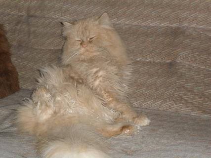 FOTKA - Už se mi chce zase spát, já za to nemůžu!