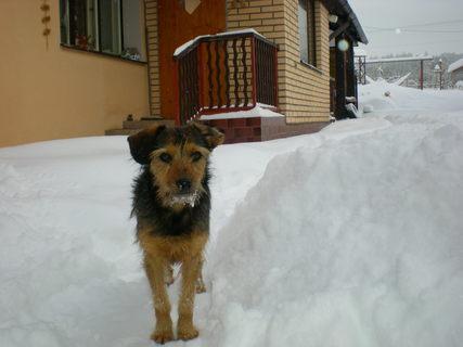 FOTKA - Sany a sníh