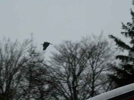 FOTKA -  Létající obr