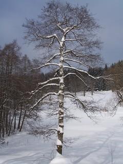 FOTKA - V lese*