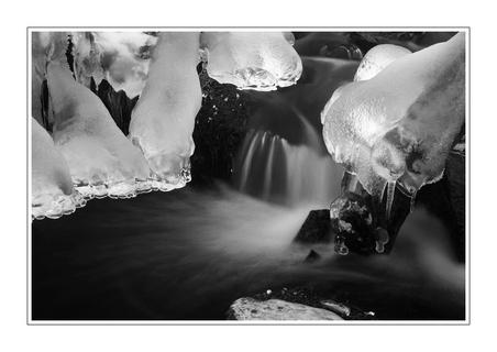 FOTKA - Ledové tlapky