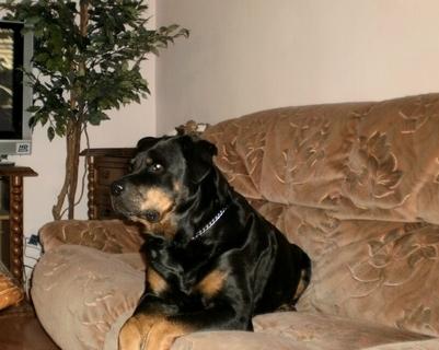 FOTKA - Moje zlatíčko Roxy - 22.1.2010