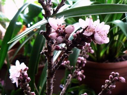 FOTKA - jaro v zimní zahradě