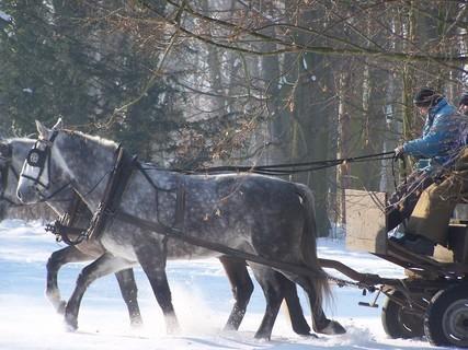 FOTKA - Slatiňanské koně-Jako z pohádky