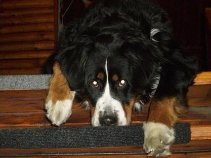 FOTKA - Jsem na schodech