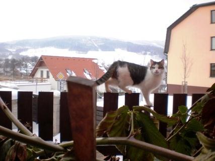 FOTKA - Nelly jde domu - 25.1.2010.