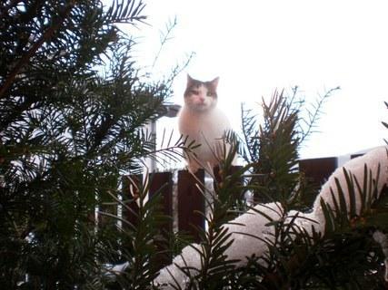 FOTKA - Nelly sedí na plotě - 25.1.2010.