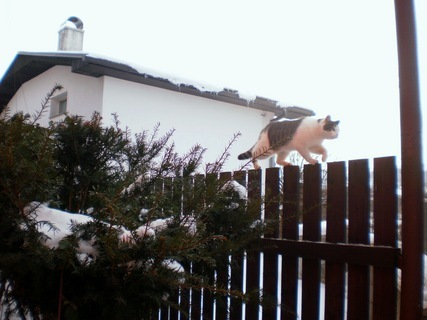 FOTKA - Nelly jde po plotě domů - 25.12010.