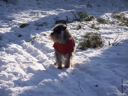 FOTKA - řádně oblečen na mrazivou procházku