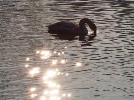 FOTKA - Zakletá  labutí princezna