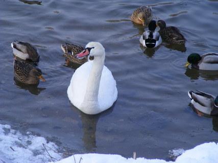 FOTKA - Rampochy i na zobáčku