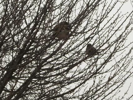 FOTKA - vrabčáci
