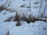 Suchá tráva ve sněhu