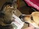 když se má kočička s pejskem ráda :o)