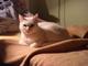 kitty v záři lampičky