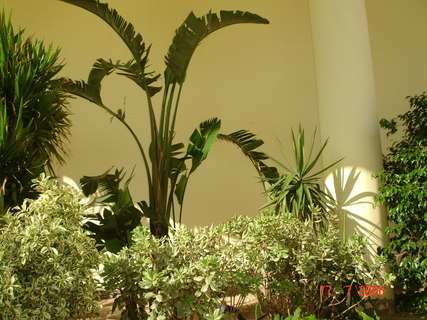 FOTKA - Hotelová zeleň 2