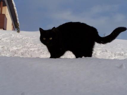 FOTKA - Kačenka na střeše