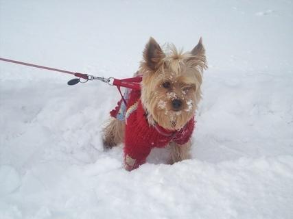 FOTKA - Zase sníh