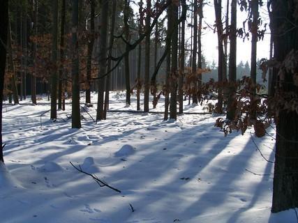 FOTKA - Zimní procházka lesem.