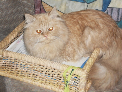 FOTKA - Garfielde, že je to šuplík z komody s mýma fakturama ti nevadí?