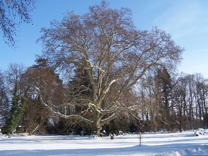 FOTKA - Strom v parku/
