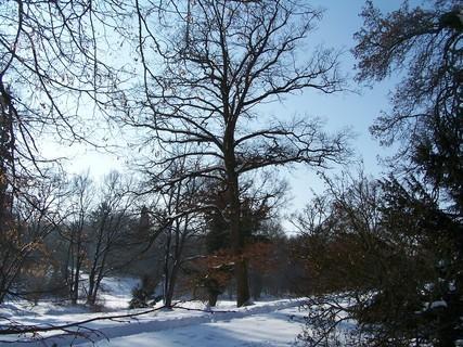 FOTKA - V zámeckém parku -Choltice