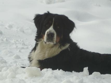 FOTKA - Sníh mám ráda