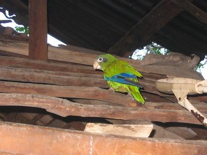 FOTKA - Papoušek na střeše