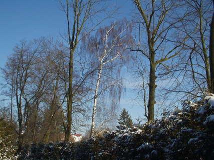 FOTKA - Pohled na stromy