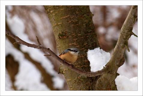 FOTKA - dlask na třešni