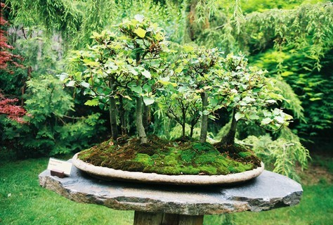 FOTKA - Bonsai II.