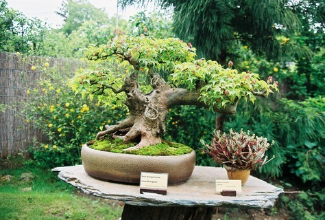 FOTKA - Bonsai III.