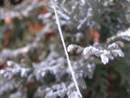 FOTKA - zima-brrr