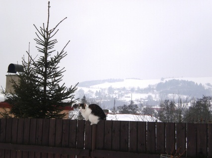 FOTKA - Nelly  sedi na plotě - 10.2.2010.