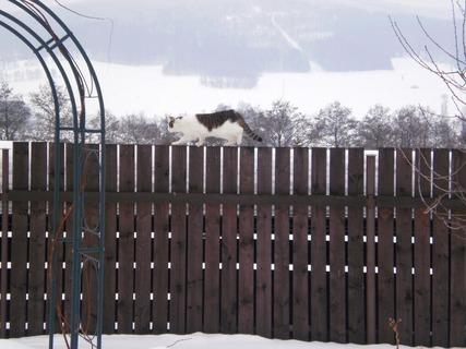 FOTKA - Nelly jde po plotě - 10.2.2010
