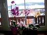 Už mám  4 orchidee/ dvě od manžela na Valentinky a 2  od tety jako dárek/.  - 20.2.2010.