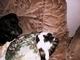 Roxy a Nelly na gauči - 16.2.2010.